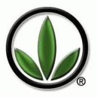 upline Herbalife sponsor
