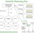 basics of the herbalife marketing plan
